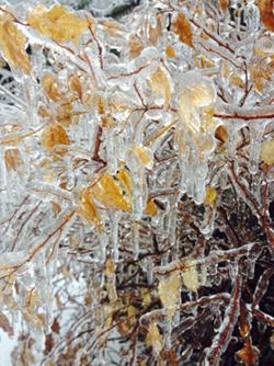 Toronto Ice Storm, December 22, 2013